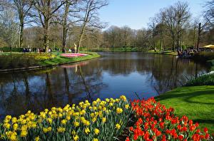Картинки Нидерланды Парки Пруд Тюльпаны Весенние Keukenhof Природа