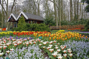 Фото Нидерланды Парки Тюльпаны Keukenhof Природа