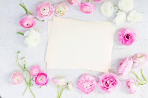 Фотографии Лютик Шаблон поздравительной открытки Цветы