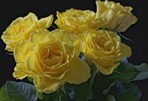 Картинка Розы Вблизи Желтый Цветы