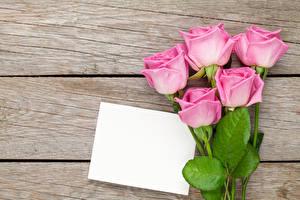 Картинки Розы Доски Шаблон поздравительной открытки Розовый Цветы