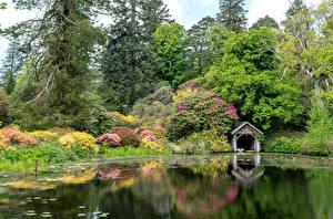 Картинки Шотландия Парки Озеро Дерево Кустов Природа