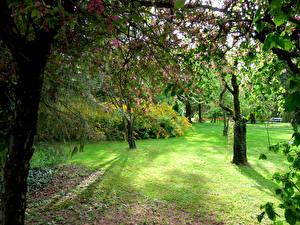 Картинка Словения Парки Цветущие деревья Деревья Газон Mozirski gaj Природа