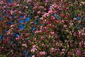 Картинки Весна Цветущие деревья Ветки