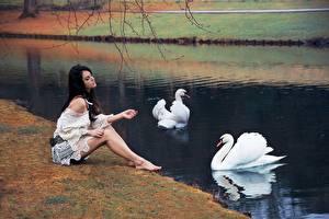 Фотография Лебеди Пруд Сидящие Девушки