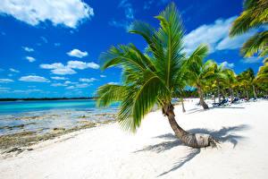 Фотографии Тропики Берег Пальмы Песок Природа