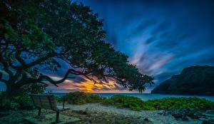 Фото Тропики Рассветы и закаты Берег Небо Штаты Гавайи Скамейка На ветке Makapuu Beach Waimanalo Природа