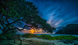 Фото Тропики Рассвет и закат Берег Небо Штаты Гавайи Скамейка На ветке Makapuu Beach Waimanalo Природа