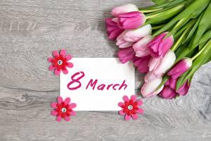 Картинки Тюльпан 8 марта Праздники Английская цветок