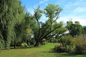 Картинка США Парк Дерева Газон Кусты Brooklyn Botanic Garden Природа