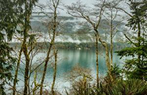 Картинки Штаты Парки Речка Деревья Туман Lake Crescent Olympic National Park
