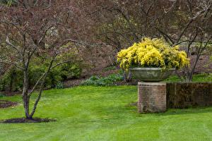 Картинки США Парки Весна Чикаго город Газоне Botanic Garden Природа