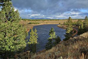 Фото Штаты Речка Парки Йеллоустон Ель Madison River Природа