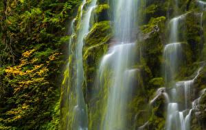Обои Штаты Водопады Мох Oregon Природа