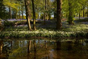 Фотография Великобритания Весенние Пруд Деревья Отражение Whitmore Природа