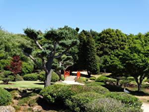 Картинки Австралия Парки Кусты Деревья Japenese Garden Toowoomba Queensland Природа