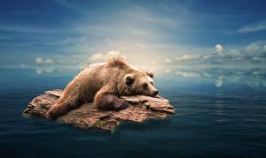 Картинки Медведь Гризли Вода Бревна Плавают животное