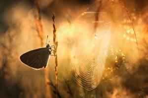 Картинки Бабочки Утро Паутина Животные