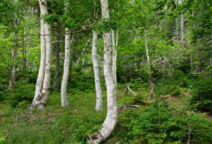 Фото Канада Леса Ствол дерева