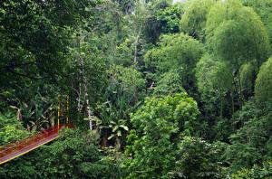 Фотография Колумбия Леса Мосты Деревья Calarca