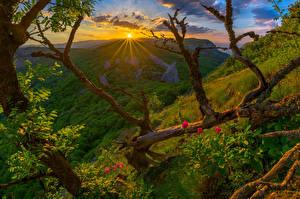 Фото Крым Россия Рассветы и закаты Пейзаж Холмы Ветки Природа