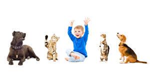 Фотографии Собаки Кошки Белый фон Мальчики Такса Дети