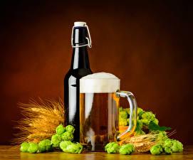 Картинки Напитки Пиво Хмель Кружка Бутылка Пена Колос Пища