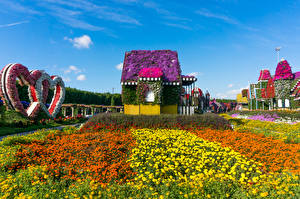 Обои Объединённые Арабские Эмираты Дубай Сады Бархатцы Здания Дизайна Серце Miracle Garden Природа