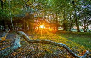 Обои Англия HDRI Деревья Лучи света Листва Ветвь Fritham Природа