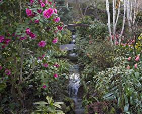 Картинка Англия Сады Водопады Камелия Кусты Walsall Garden Природа