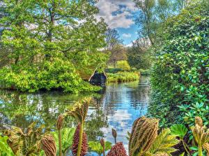 Картинка Англия Парки Пруд Деревья Scotney Castle  Park Природа