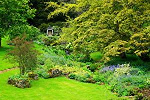 Фото Англия Парки Газон Деревья Sezincote Park Природа