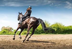 Фотографии Конный спорт Лошади Бегущий спортивная Девушки