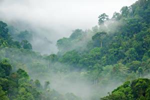 Фотография Леса Тропики Туман Jungle