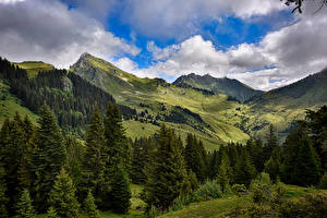 Картинка Франция Пейзаж Луга Горы Ель Облака Mieussy