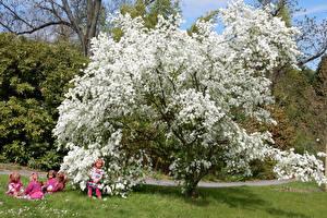 Фотография Германия Парки Весна Цветущие деревья Кукла Девочки Трава Grugapark Essen Природа