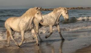 Фотография Лошади Берег Двое Животные