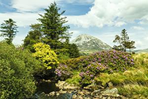 Картинка Ирландия Парки Ручей Ель Холмы Donegal Природа