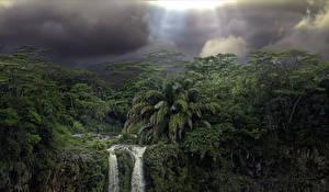 Фото Маврикий Леса Водопады Пальмы Природа