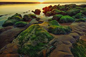 Картинки Нидерланды Берег Камень Рассветы и закаты Мох Katwijk Природа