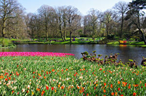 Обои Нидерланды Парки Пруд Тюльпаны Весенние Деревья Keukenhof