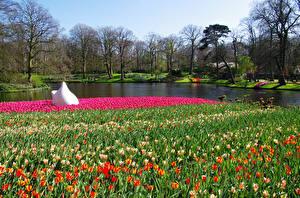 Картинка Нидерланды Парки Весенние Пруд Тюльпаны Keukenhof