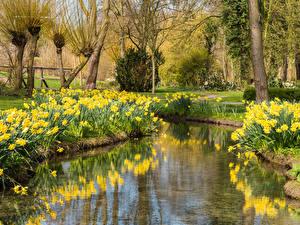 Картинки Парки Весна Пруд Нарциссы Деревья Природа