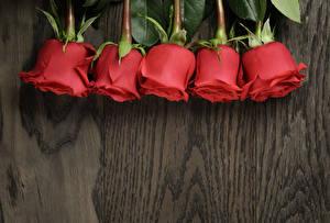 Фотография Розы Крупным планом Доски Красный Цветы