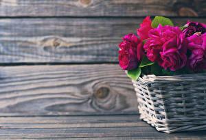 Фото Розы Доски Корзина Бордовый Цветы