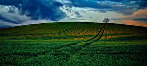 Фото Пейзаж Поля Рассветы и закаты Небо Природа
