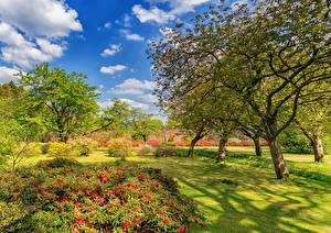 Обои Шотландия Парки Деревья Кусты Газон Bargany Gardens