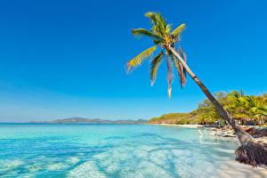 Фотография Море Тропики Небо Пальма Природа