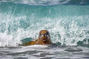 Фото Тюлени Волны Море