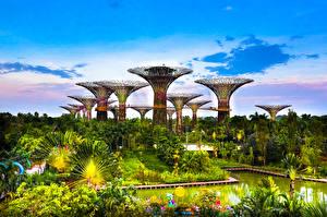 Картинки Сингапур Сады Пруд Дизайн Деревья Gardens by the Bay Природа